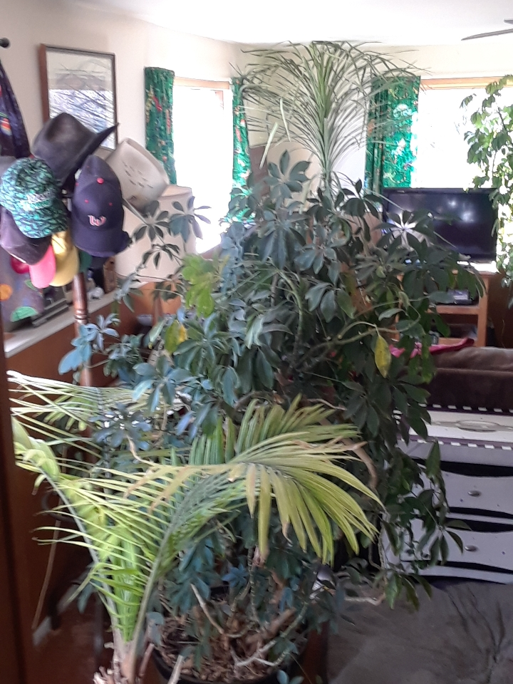 plants 1118