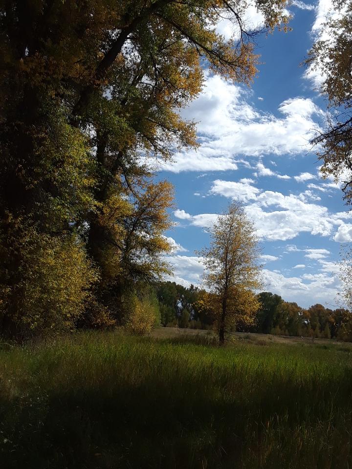 trees 1118