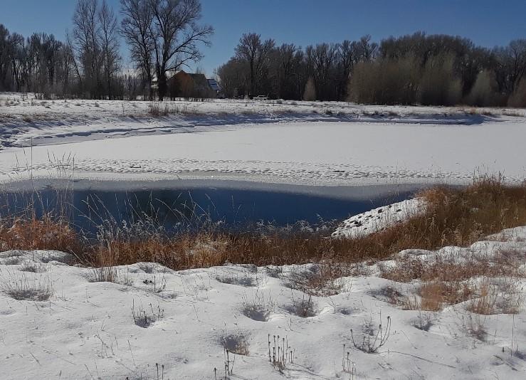 pond 0119