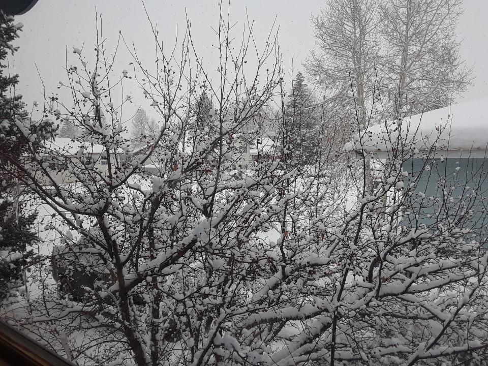 snow 0119