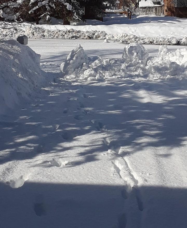 carol driveway 0219