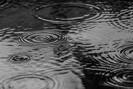 puddle 0219