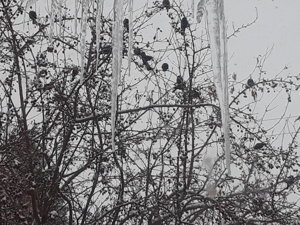 birds 0319