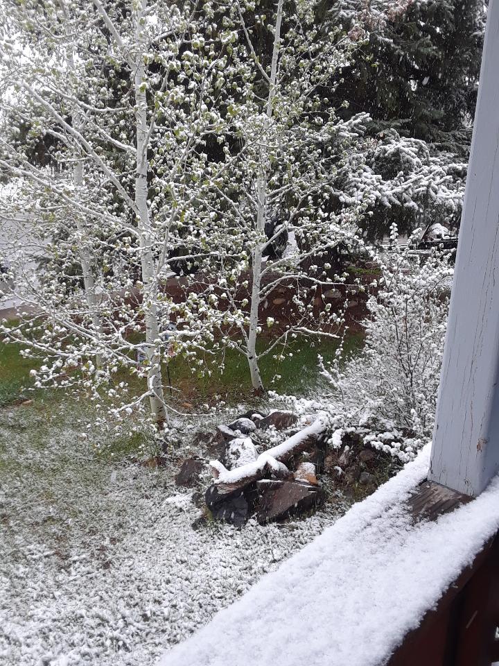 may snow 0519