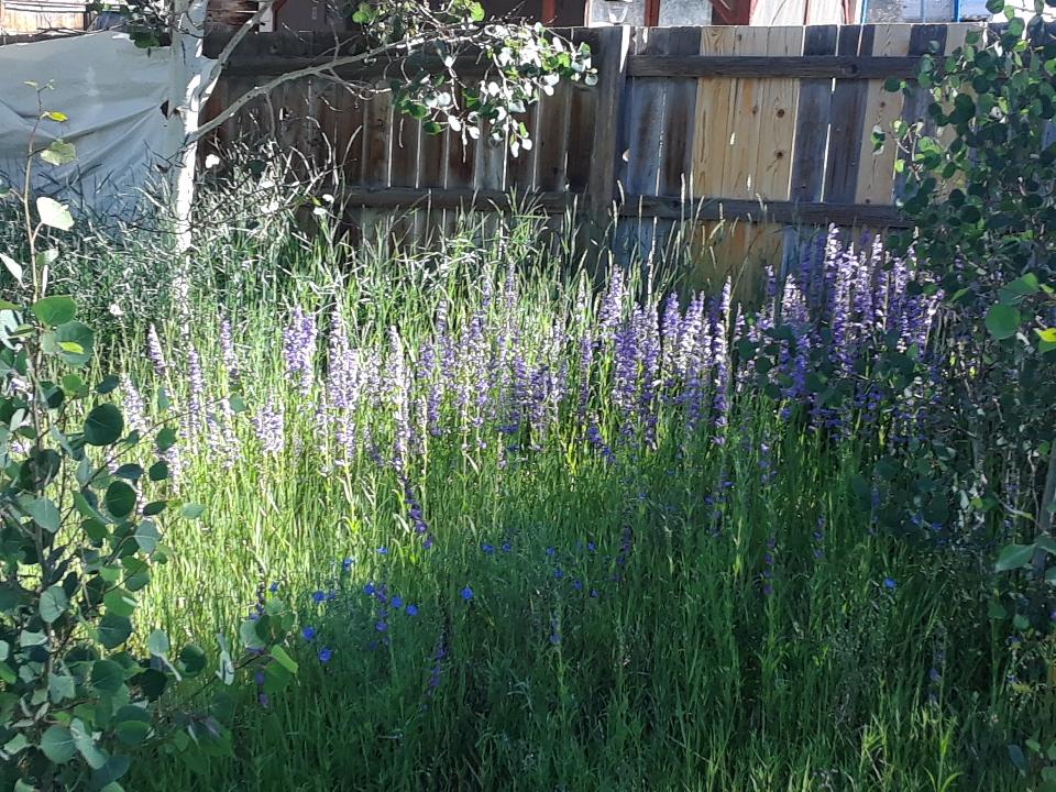 meadow 0719