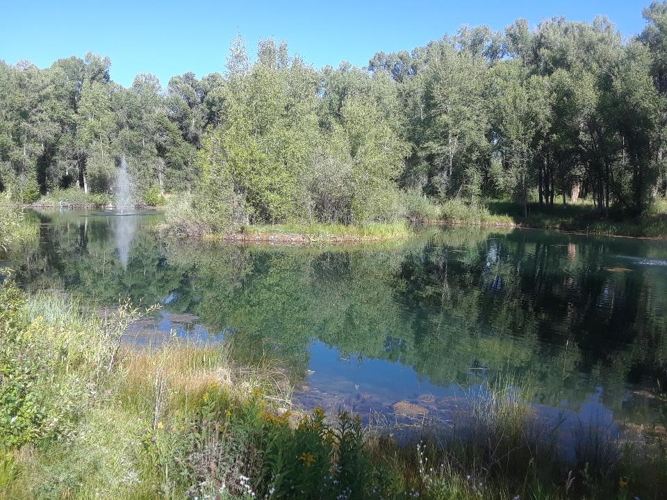 pond 0819