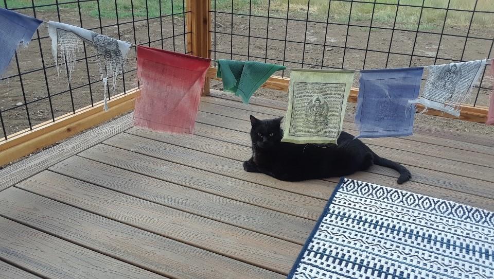 ki'o flags 0819