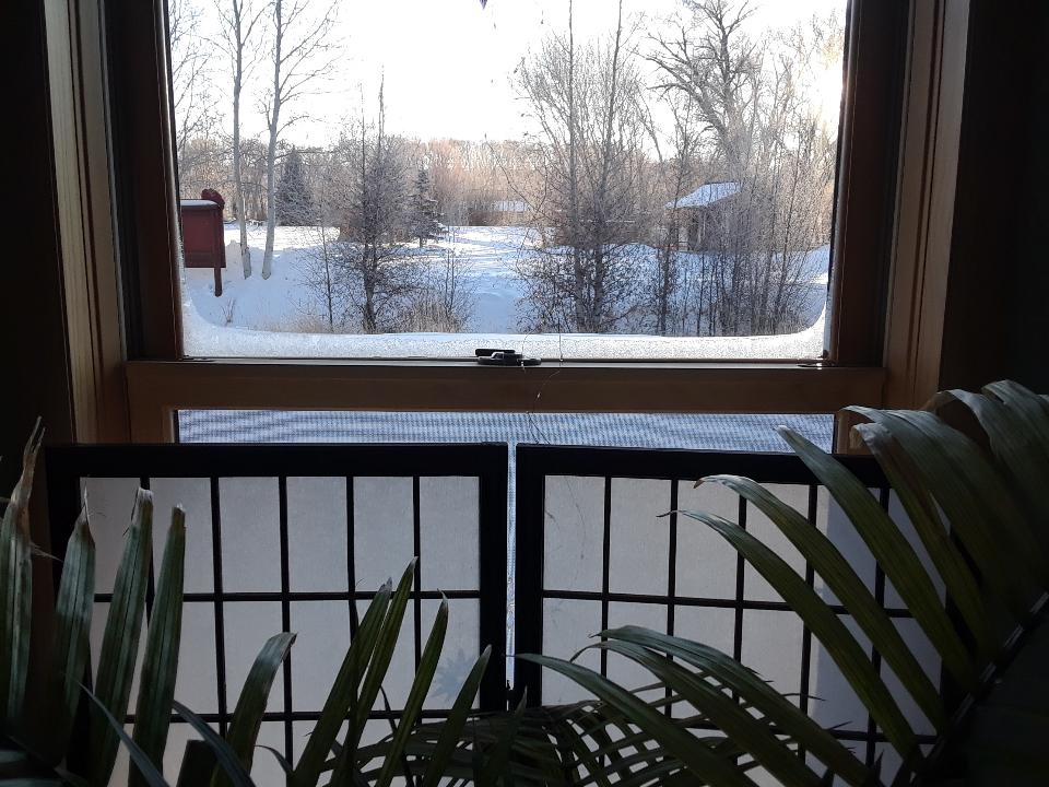 frosty window 1219