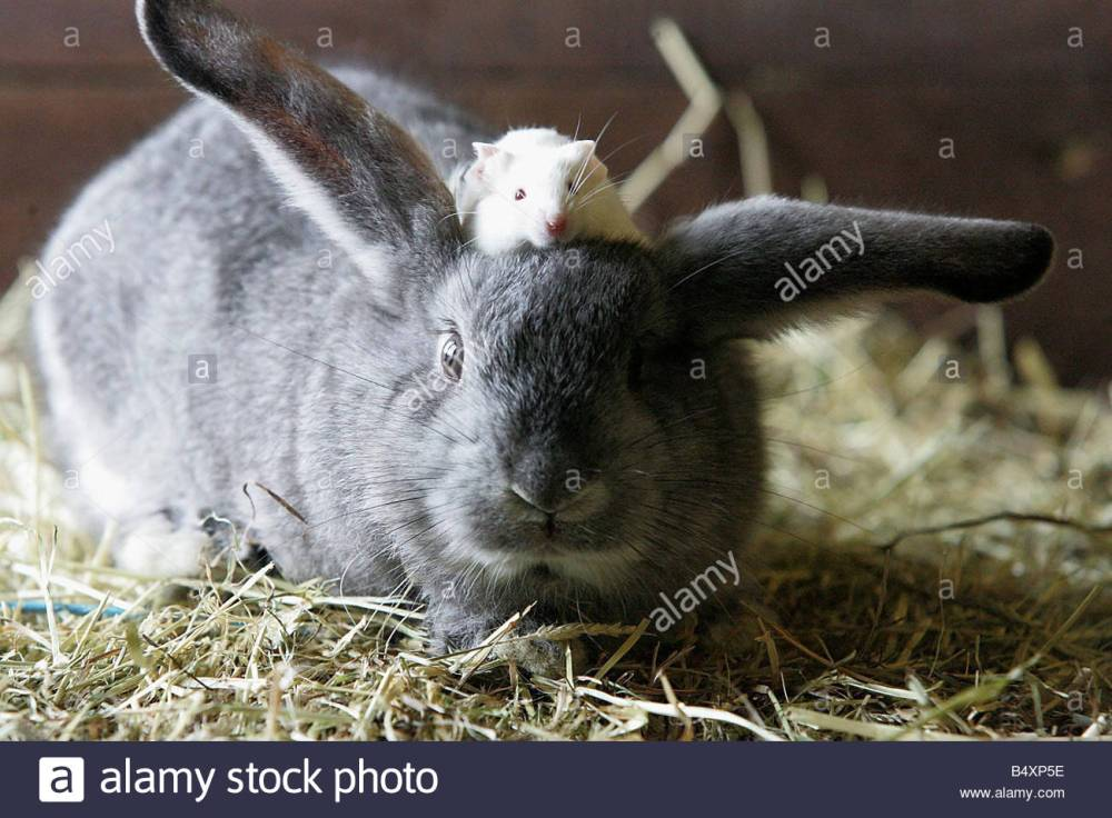 bunny and mouse 0420