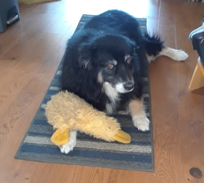 oz and duck 0420