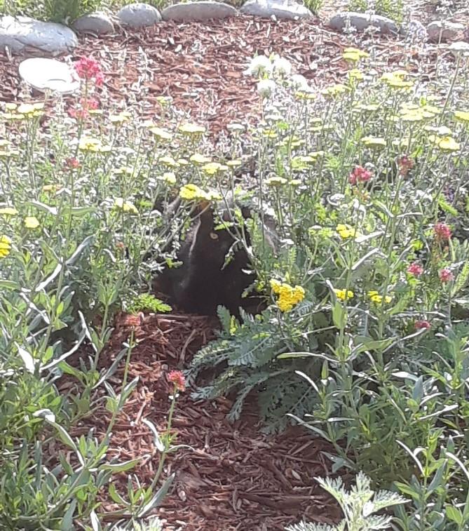 kio in garden 0820